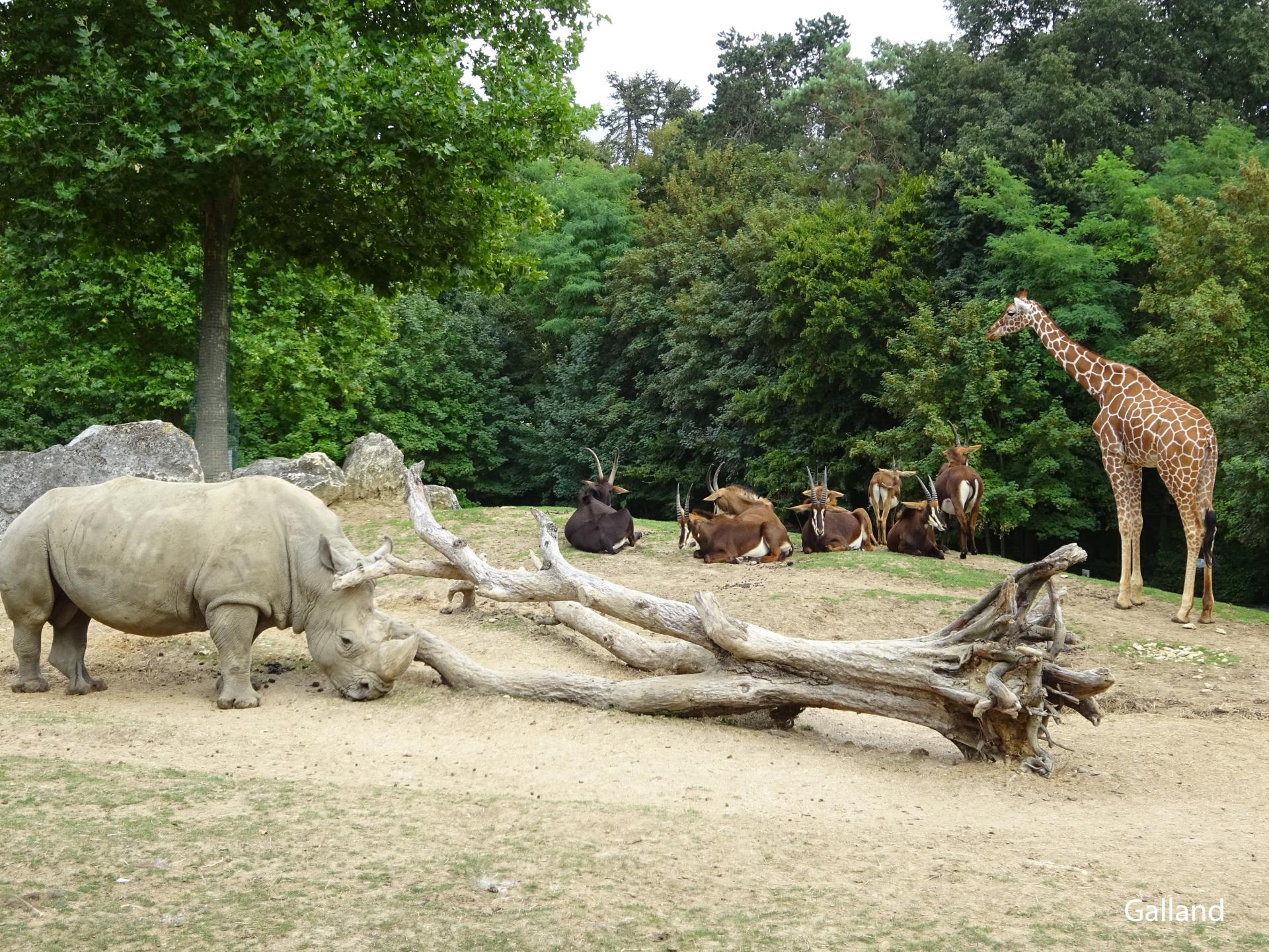 Zoo beauval 3